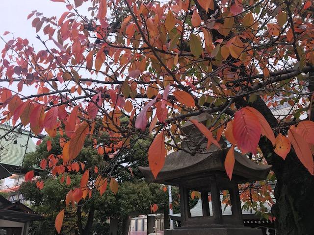 お仕事休みに神社へお礼参りと桜の紅葉