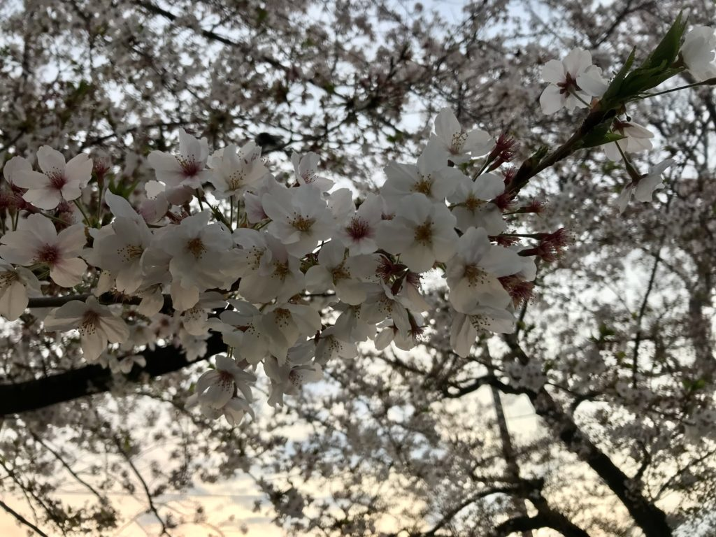 外出自粛でロザンの楽屋オススメ…京大芸人とDIYキット